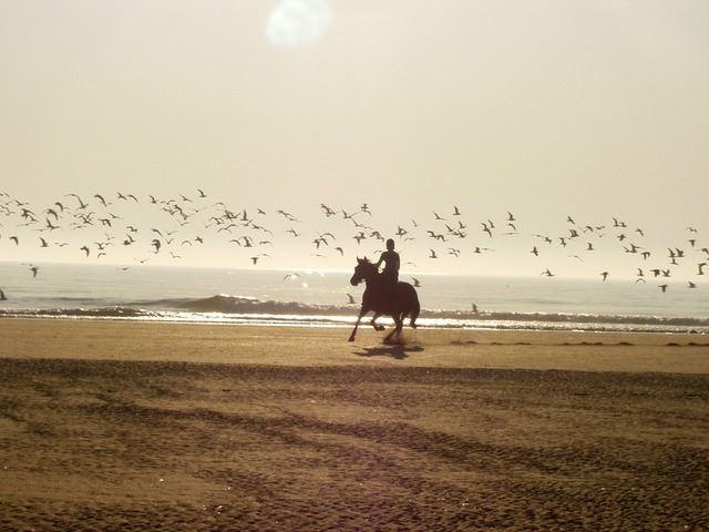 cavallo-spiaggia